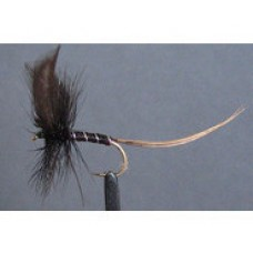 Black drake mayfly