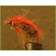 CDC beetle red